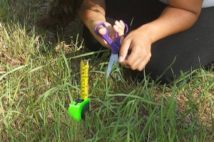 Perfectionism_-_Measuring_Grass_Blade2-_470x314_pix